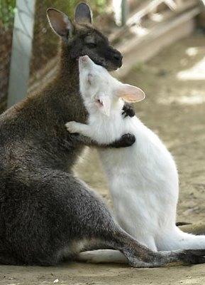 abbracci