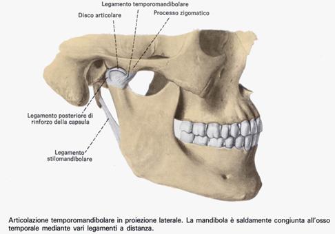 Il Chiropratico & il Dentista. Parte 4