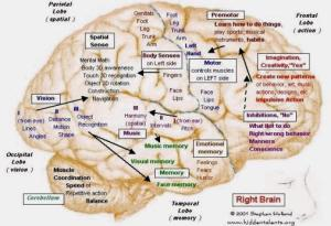 cervello destro