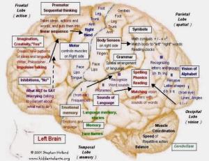 cervello sinistro