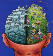 emisferi-cerebrali1